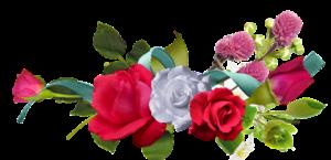 rose-2024472_960_720